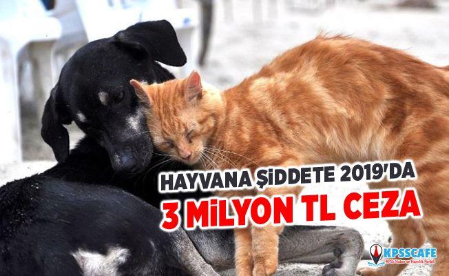 Hayvana şiddete 2019'da 3 milyon TL ceza!