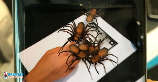 Böcek artık korkutamayacak!Attırılmış Gerçeklik uygulaması ile böcek ve örümcek korkusu ile baş etmek mümkün