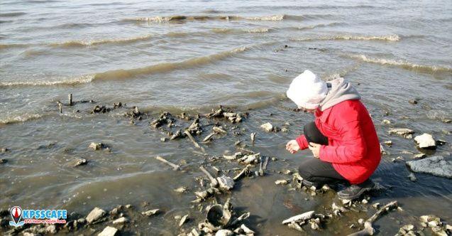 Van Gölü sahilinde insan kemikleri bulundu!