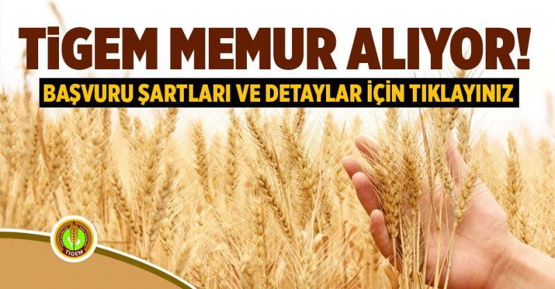 Tarım İşletmeleri Genel Müdürlüğü (TİGEM) Memur Alıyor! İşte Başvuru Şartları...
