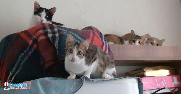 2 odalı evde 17 kedi ile birlikte yaşıyor!