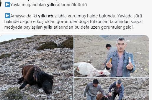 Amasya'da 2 YILKI Atı Vahşice Katledildi !