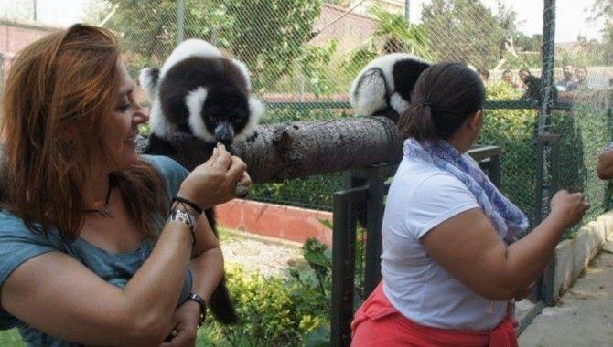 Öğretmenler, Hayvanat Bahçesinde