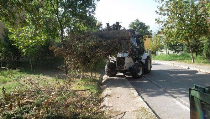 Ağaç dallarını budayanlar dikkat!