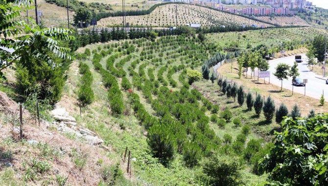 Yılsonuna kadar hedef toplam 500 bin ağaç
