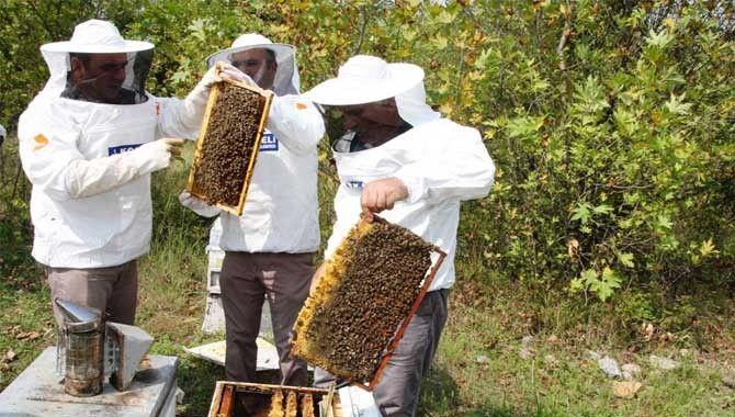 Yığılca arıları beğenildi
