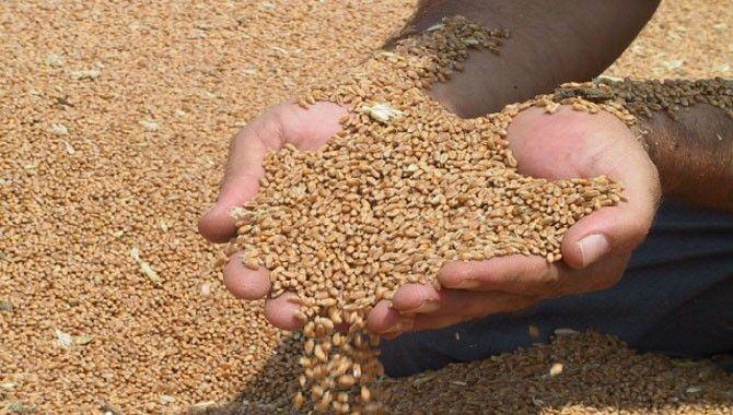 Tohum desteğine 266 başvuru