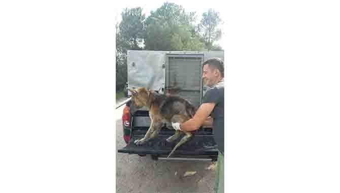 Zabıtadan sahipsiz hayvanlara şefkat