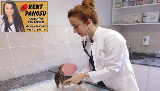Yavru kediye fıtık ameliyatı