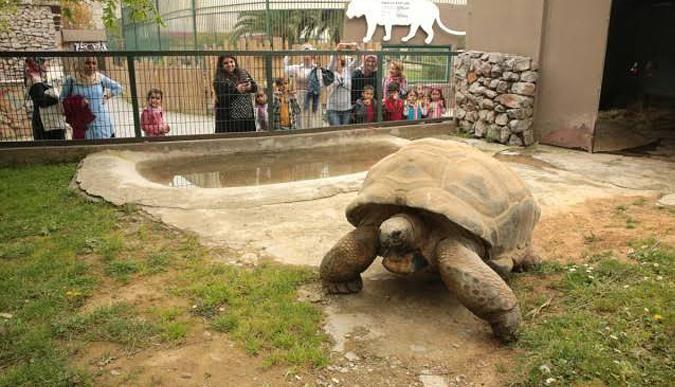 Hayvanat bahçesi ziyaretçi rekoru kırdı