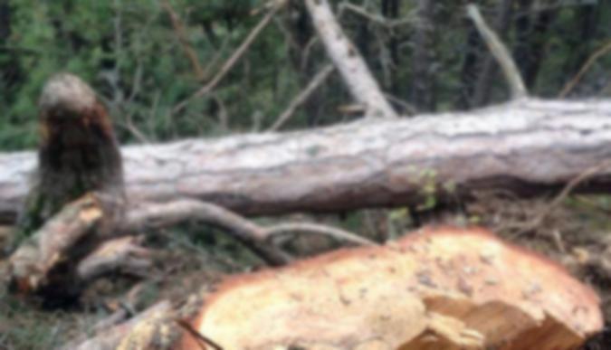 Kestiği ağacın altında kalan kişi yaralandı