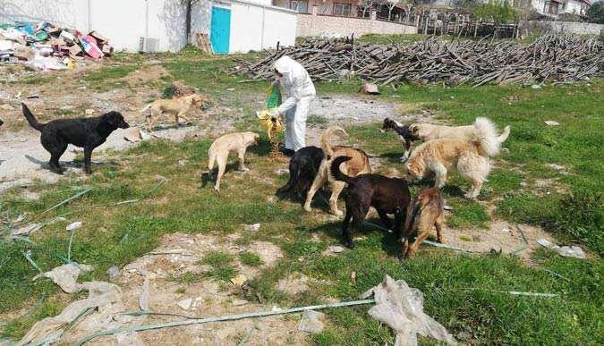 Vali Aksoy, sokak hayvanlarını aç bırakmadı