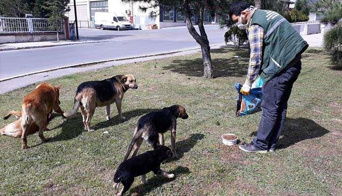 20 ton mama sokak hayvanlarına verildi