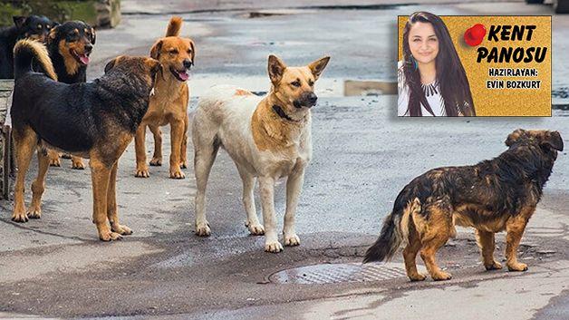 Yuvam Akarca'da köpek istilası