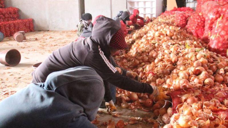 Çiftçiden alınan soğan ihtiyaç sahiplerine ücretsiz dağıtılacak