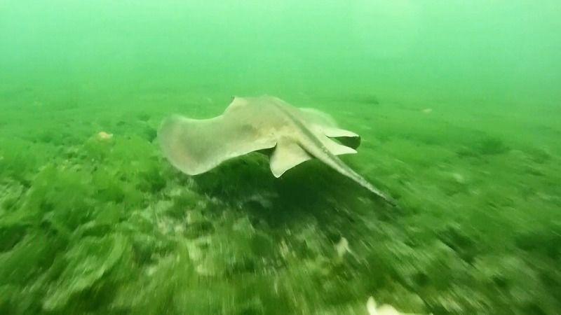 Kocaeli Körfezi, deniz canlılarının cazibe merkezi