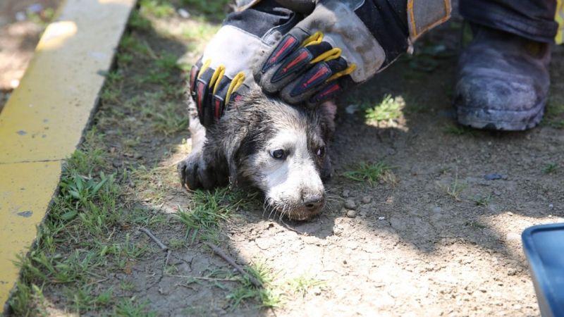 Anne köpek uyardı, İtfaiye kurtardı