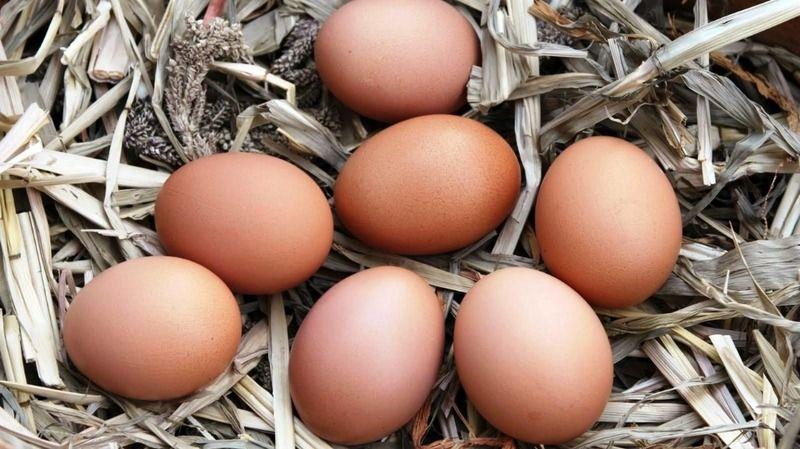 Çiftçilere yüzde 50 hibeli tavuk desteği sağlanacak
