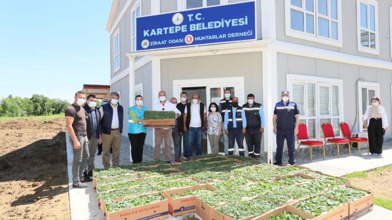 İzmit Belediyesi'nden ildeki tüm çiftçilere fide desteği