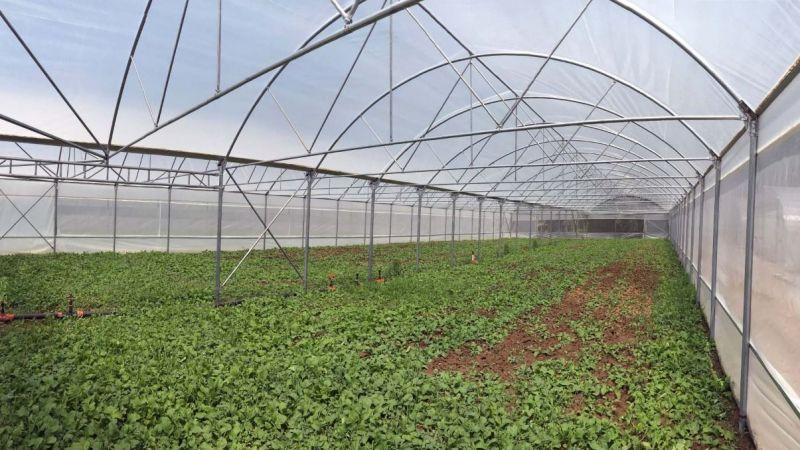 Yüzde 50 hibe destekli seralar çiftçilere teslim ediyor