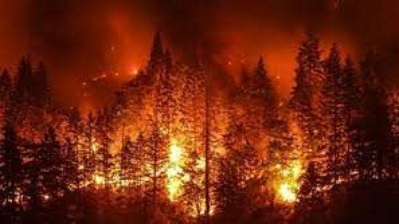 Bakandan orman yangınlarına ilişkin son bilgiler