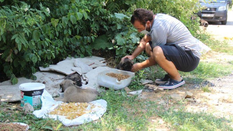 Ormanlara girişler yasaklanınca hayvanlar için harekete geçti