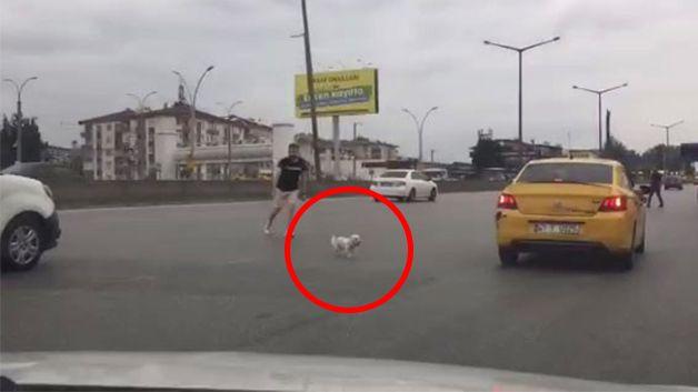 Kaçan köpek, D-100'ü birbirine kattı