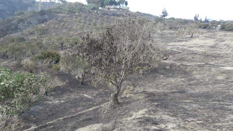 Söke'de yangın 16 saat sonra söndürüldü