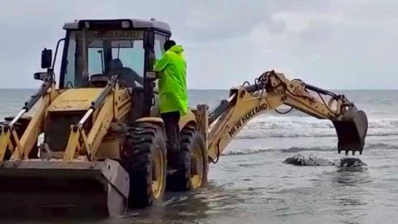 Büyükbaş hayvanı ayaklarından bağlayıp denize attılar