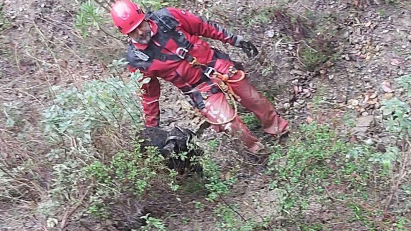 Söke'de keçi kurtarma operasyonu