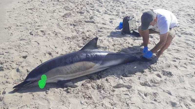 Yunus sahile vurdu