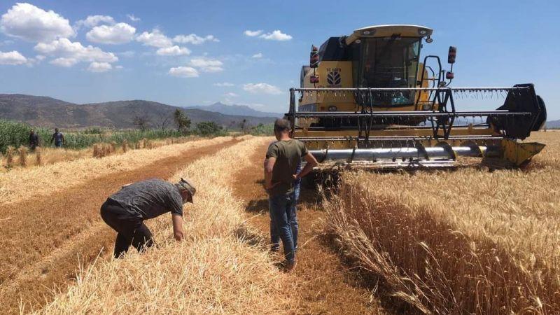 Bölgede buğday hasadı devam ediyor