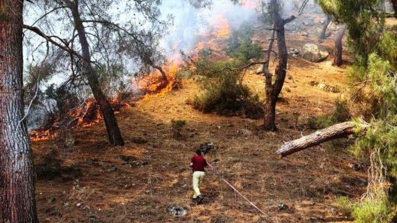 Aydın'daki yangında 2 hektar kızılçam ormanı zarar gördü