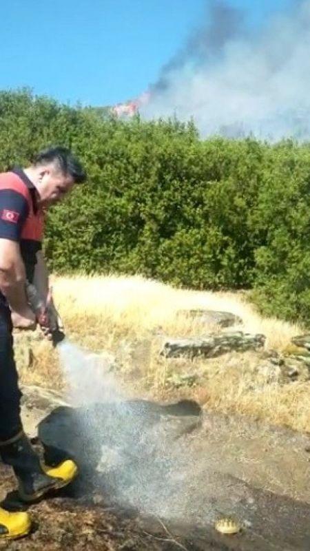 Yangında mahsur kalan kaplumbağanın imdadına itfaiye ekipleri yetişti