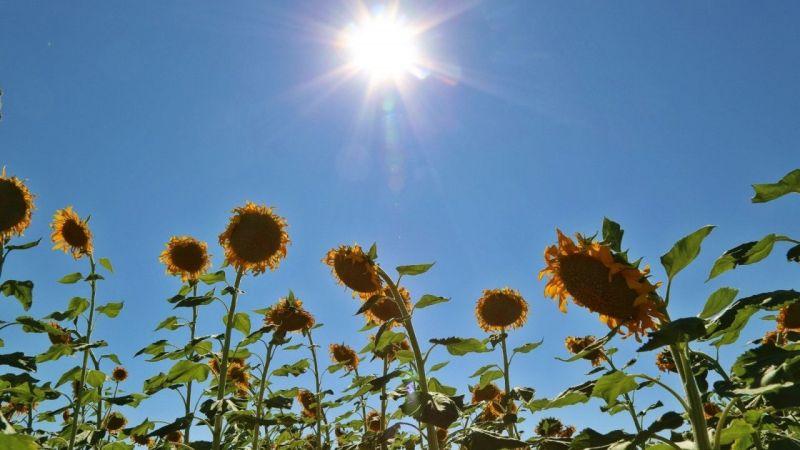 Uzman Dr. Kunt'tan 'Güneş çarpması' uyarısı