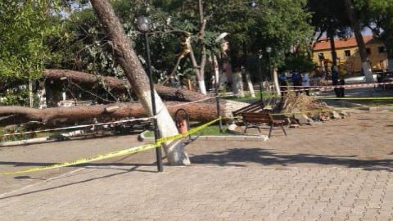 Fırtına koskoca ağaçları kökünden söktü