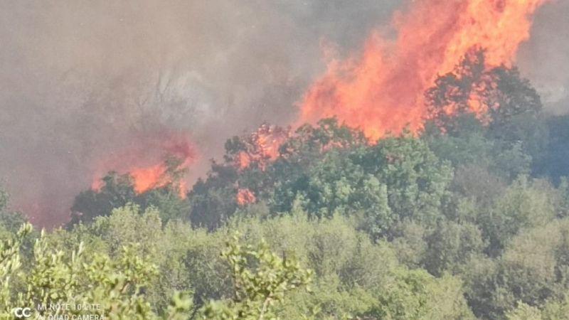 Aydın-Muğla sınırında makilik  yangını