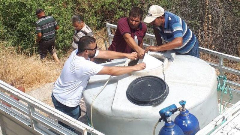 Azap Gölü'ne 100 bin sazan balığı yavrusu salındı