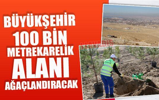 Büyükşehir 100 bin metrekarelik alanı ağaçlandıracak