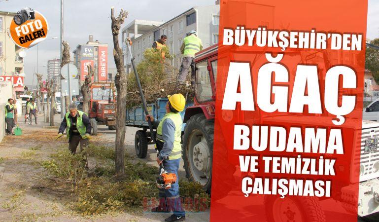Büyükşehir'den ağaç budama ve temizlik çalışması