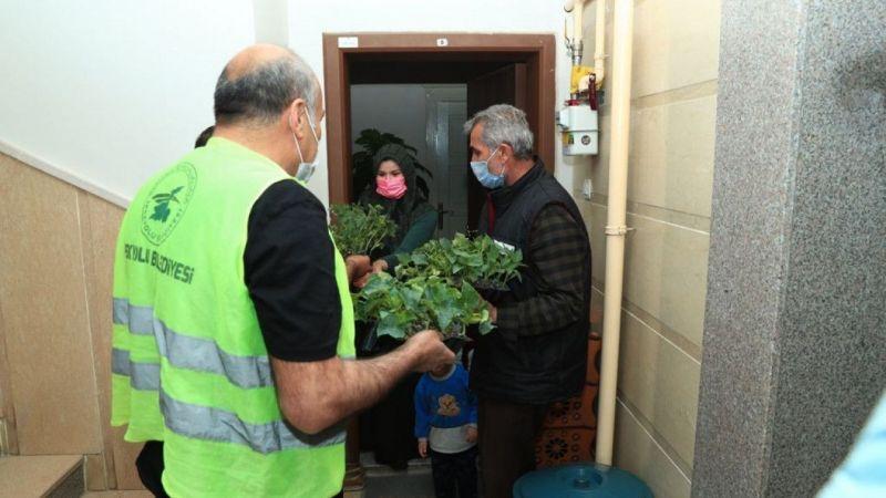 İpekyolu Belediyesi balkonları bahçeye çeviriyor