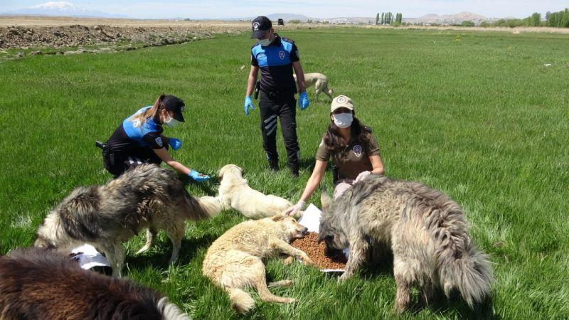 Tam kapanmada yiyecek bulamayan hayvanlar polise emanet