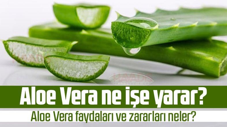 Aloe Vera ne işe yarar? Aloe Vera faydaları ve zararları neler?