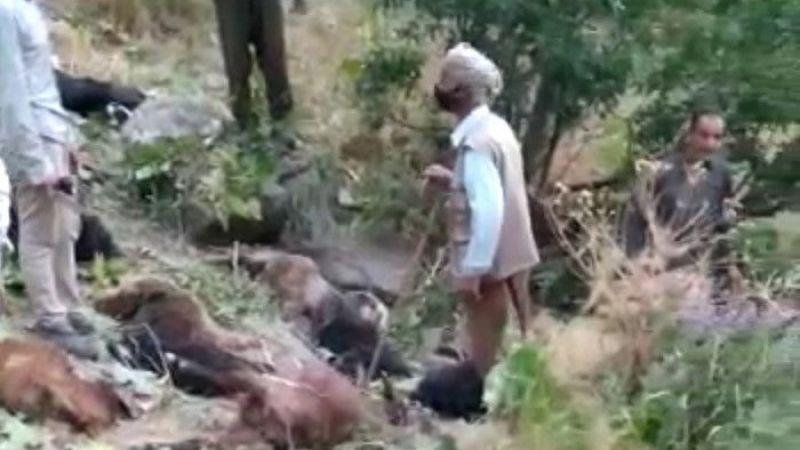 Şemdinli'de kurtların saldırdığı 70 hayvan telef oldu
