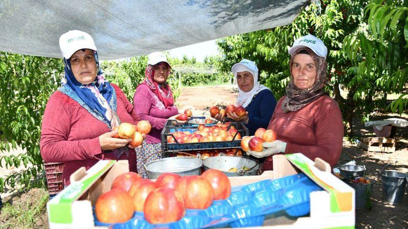 Bursa İznik'te Nektarin Şenliği'nin başladı