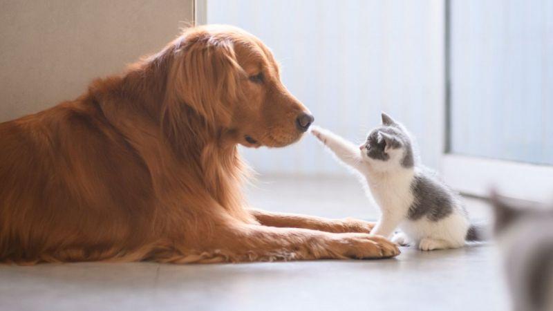 Hayvan hakları yasası Meclis'te imzaya açıldı