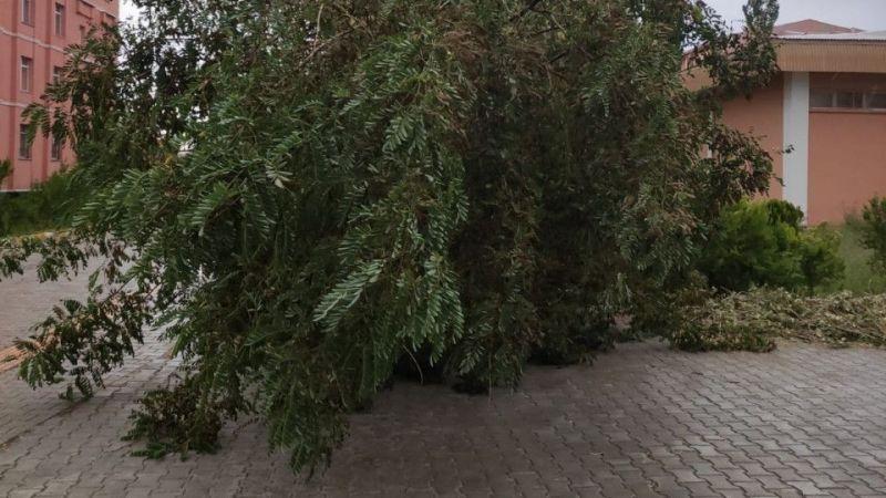 Van'da fırtına nedeniyle ağaçlar devrildi
