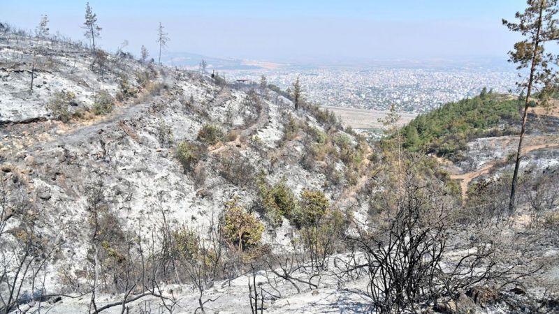Osmaniye'de orman yangınıyla ilgili 5 gözaltı!