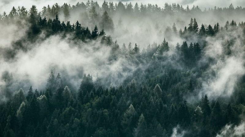 Yanan ağaç tekrar yeşerir mi? Yanan yerler haritası