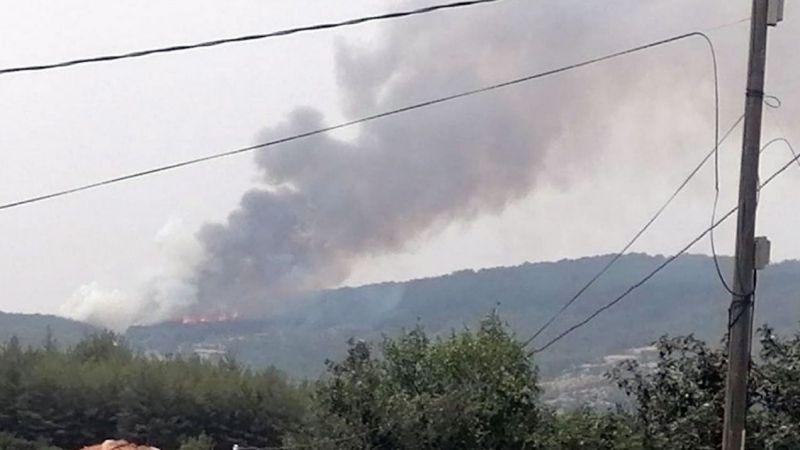 Aydın haber: Bozdoğan'da orman yangını başladı